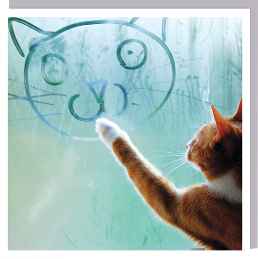 cat window drawing photographic U-Studio funky 1000-words quirky unusual modern cool card cards greetings greeting original classic wacky contemporary art humorous