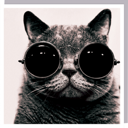 cat sunglasses glasses photographic U-Studio funky 1000-words quirky unusual modern cool card cards greetings greeting original classic wacky contemporary art humorous