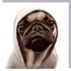 1000-words hoody pug dog cute photographic U-Studio funky quirky unusual modern cool card cards greetings greeting original classic wacky contemporary art humorous