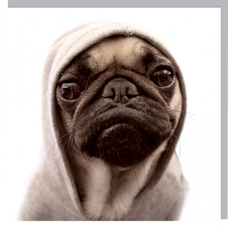 1000-words hoody pug dog cute photographic U-Studio funky quirky unusual modern cool card cards greetings greeting original classic wacky contemporary art humorous