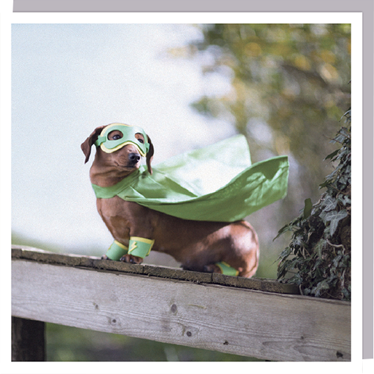 daschund sausage dog superhero cute photographic U-Studio 1000-words funky quirky unusual modern cool card cards greetings greeting original classic wacky contemporary art humorous