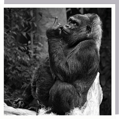 funky quirky unusual modern cool card cards greetings greeting original classic wacky contemporary art humorous 1000-words gorilla monkey swearing funny photographic U-Studio