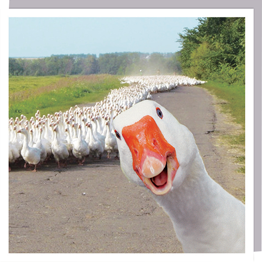 funky quirky unusual modern cool card cards greetings greeting original classic wacky contemporary art humorous 1000-words photobomb goose funny photographic U-Studio