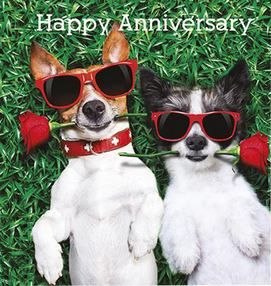 dogs anniversary the-art-group sunglasses cute funny unky quirky unusual modern cool card cards greetings greeting original classic wacky contemporary art illustration photographic