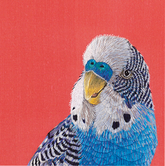 funky quirky unusual modern cool card cards greetings greeting original classic wacky contemporary art illustration fun vintage retro smuggler budgie kate barlow royal academy of arts art-press
