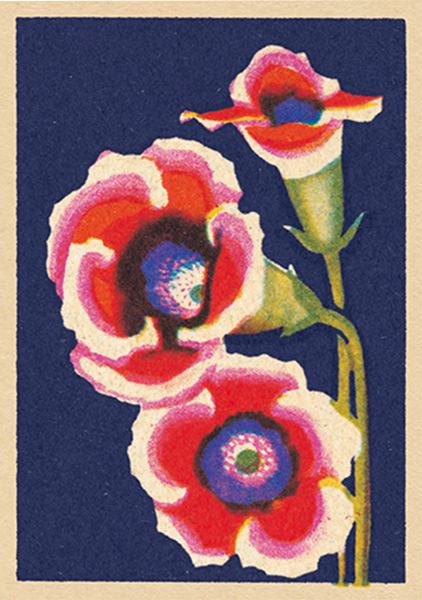 art-press blush funky quirky unusual modern cool card cards greetings greeting original classic wacky contemporary art illustration fun vintage retro matchbox flower