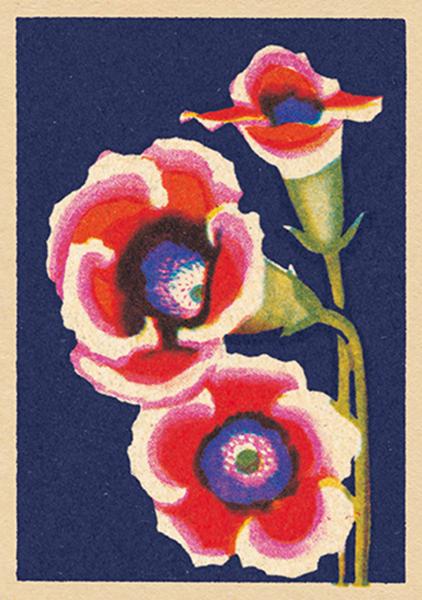 art-press blush funky quirky unusual modern cool card cards greetings greeting original classic wacky contemporary art illustration fun vintage retro matchbox flower