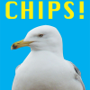funky quirky unusual modern cool card cards greetings greeting original classic wacky contemporary art illustration photographic distinctive vintage retro toypincher humourous funny seagull chips brighton