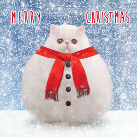 Marie-curie charity funky quirky unusual modern cool card cards greetings greeting original classic wacky contemporary art illustration photographic distinctive vintage retro Christmas xmas Tracks humourous funny cute snowball cat