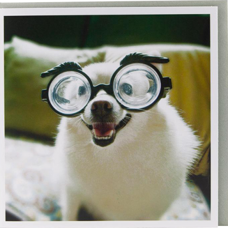 funky quirky unusual modern cool card cards greetings greeting birthday malarkey original classic wacky contemporary art illustration photographic distinctive vintage retro cartoon U-Studio funny rude humorous 1000 words dog with glasses