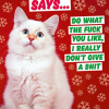 funky quirky unusual modern cool card cards greetings greeting original classic wacky contemporary art illustration photographic distinctive vintage retro Christmas xmas malarkey dean morris humourous funny Christmas cat says do what the fuck you l ike I really don't give a shit dmx267