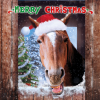 funky quirky unusual modern cool card cards greetings greeting original classic wacky contemporary art illustration photographic distinctive vintage retro Christmas xmas Tracks humourous funny cute charity packs malarkey xj128 horse cancer Marie curie