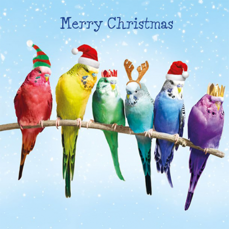 funky quirky unusual modern cool card cards greetings greeting original classic wacky contemporary art illustration photographic distinctive vintage retro Christmas xmas Tracks humourous funny cute charity packs malarkey xj142 budgies birds rainbow trust children
