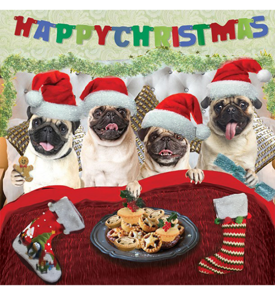 funky quirky unusual modern cool card cards greetings greeting original classic wacky contemporary art illustration photographic distinctive vintage retro Christmas xmas Tracks Humorous funny cute malarkey pugs in bed xs282
