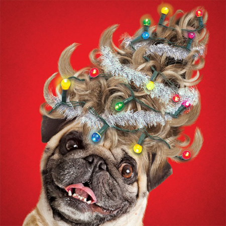 funky quirky unusual modern cool card cards greetings greeting original classic wacky contemporary art illustration photographic distinctive vintage retro Christmas xmas Tracks Humorous funny cute malarkey tree hair pug dog xs286 glitter flitter