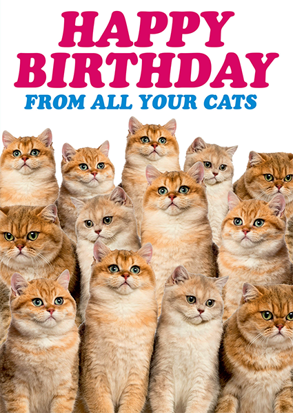 Malarkey Cards Brighton sell funky quirky unusual modern cool card cards greetings greeting original classic wacky contemporary art photographic fun vintage retro funny rude dean-morris birthday happy birthday from all your cats DMA-313