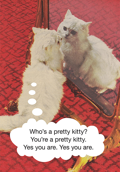 Malarkey Cards Brighton sell funky quirky unusual modern cool original classic wacky contemporary art illustration photographic distinctive vintage retro funny rude humorous birthday kiss me kwik KMK343 pretty kitty cat