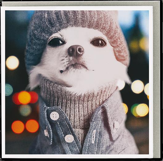 original classic wacky contemporary art illustration photographic distinctive vintage retro funny rude cute humorous birthday seasonal greetings cards sergei dog ustudio 1000 words